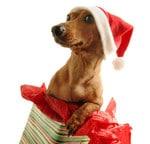 (関連サイト)留学カウンセラーブログが更新されました。 テーマは「海外のクリスマス事情とは・・・」