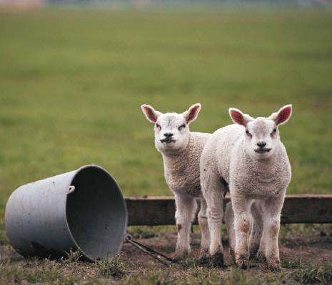 <今週のピックアップ>これから春・夏を迎えるニュージーランドで、アウトドアにチャレンジしませんか?