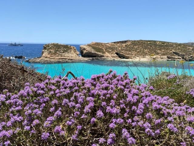 マルタ留学 海の色 鮮やかな青
